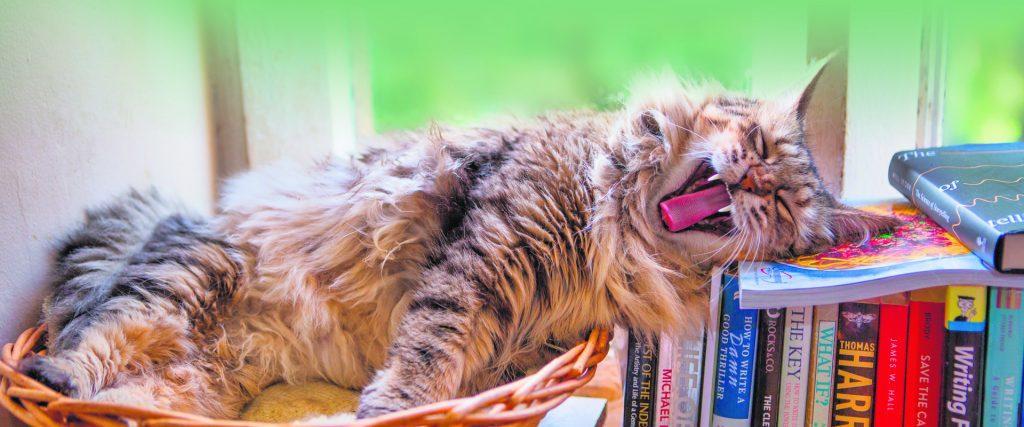 Kat gaapt liggend op stapel boeken