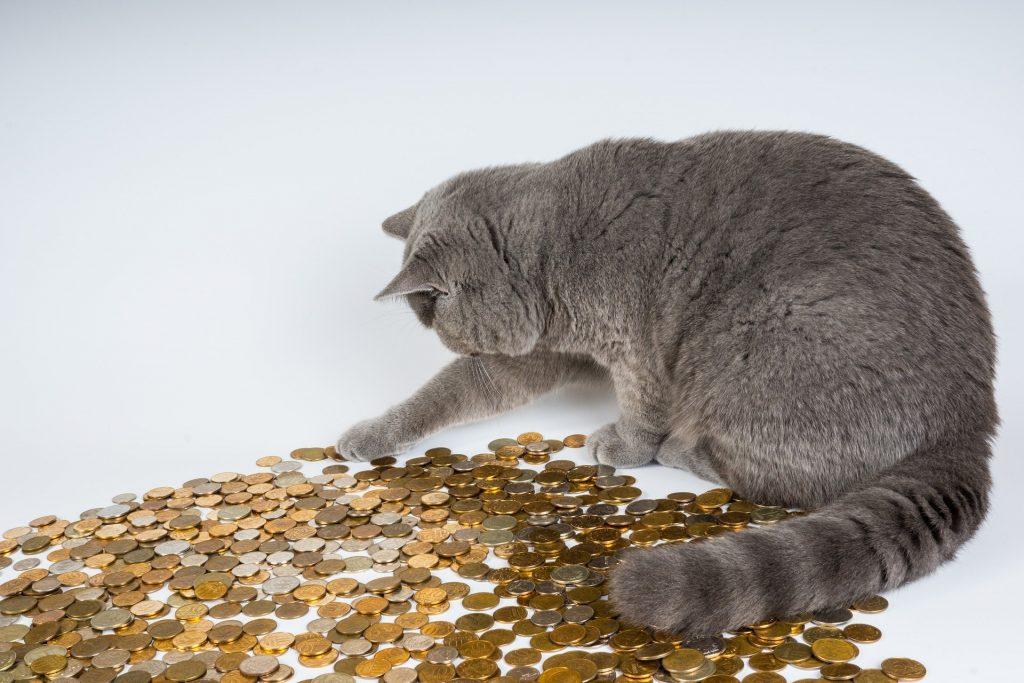 Kat telt geld
